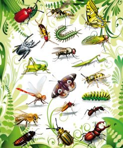 HERMA 3231 MAGIC INSECTS 2D FO