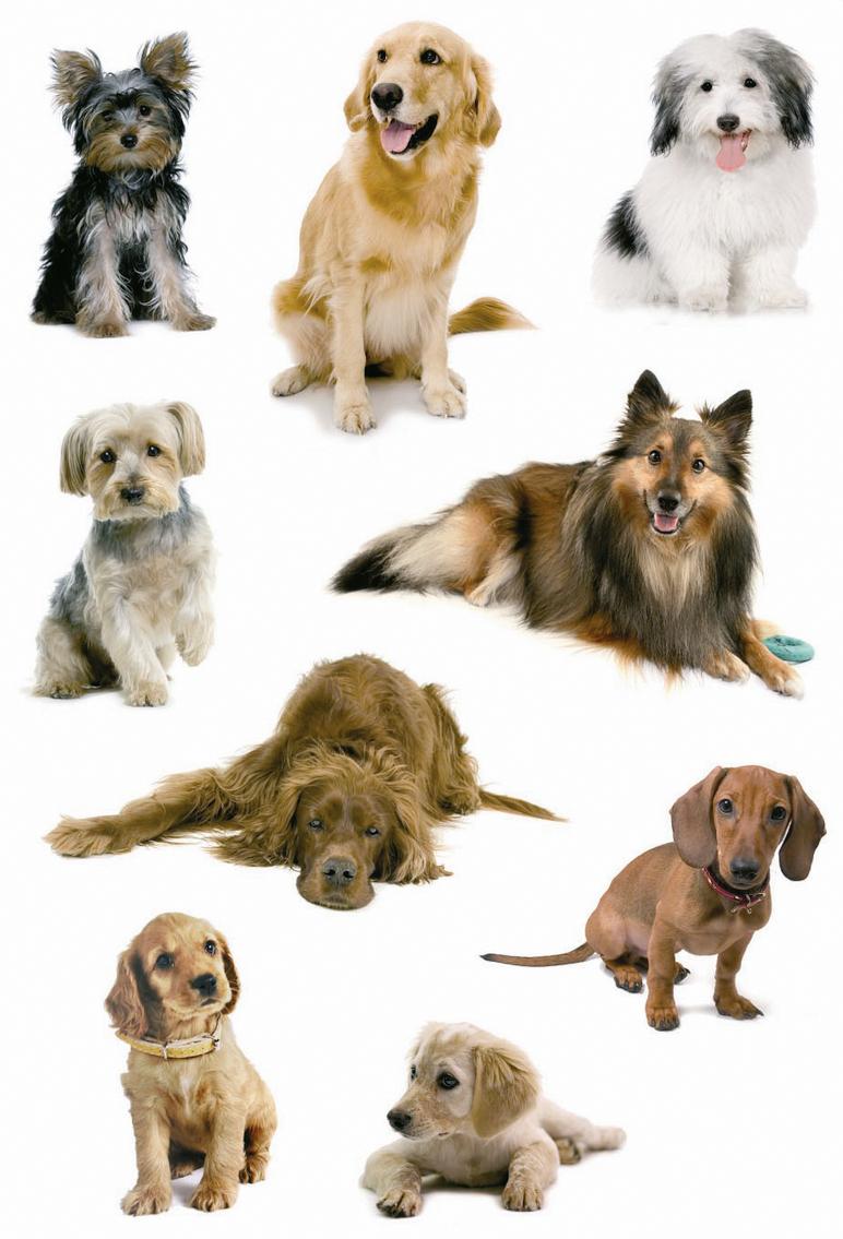 картинки для распечатки собаки цветные партиец