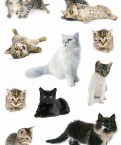 HERMA 3433 DECOR CAT PHOTOS