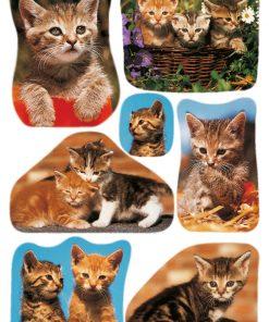 HERMA 3527 DECOR CAT PHOTOS