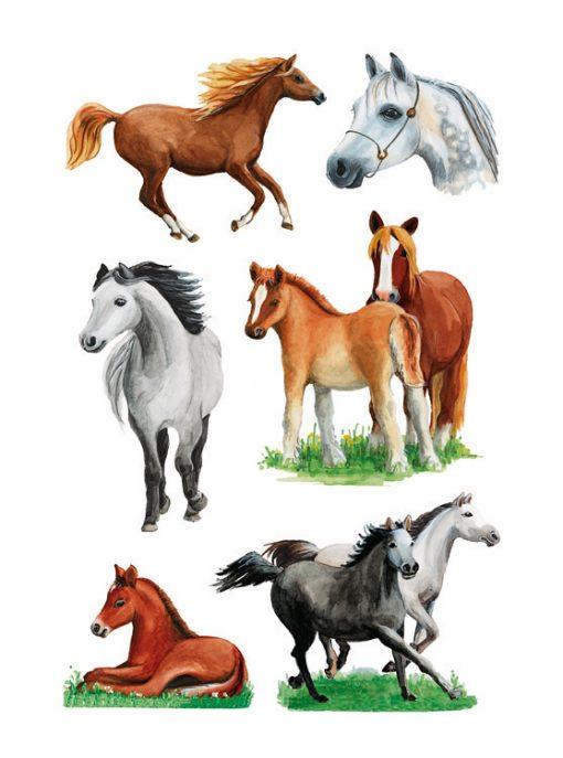HERMA 3553 DECOR HORSE SPECIES