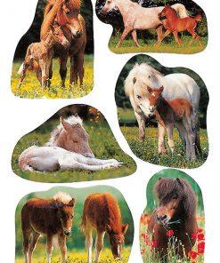HERMA 5443 DECOR PHOTOS HORSES